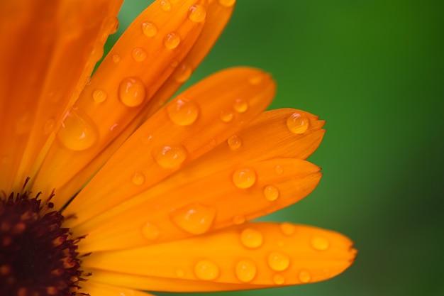Herfstbloem van gerbera en calendula close-up macro
