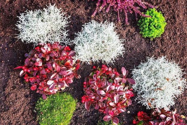 Herfstbloemen bloembed met roze heidegras en planten bloemenachtergrond grafdecoratie