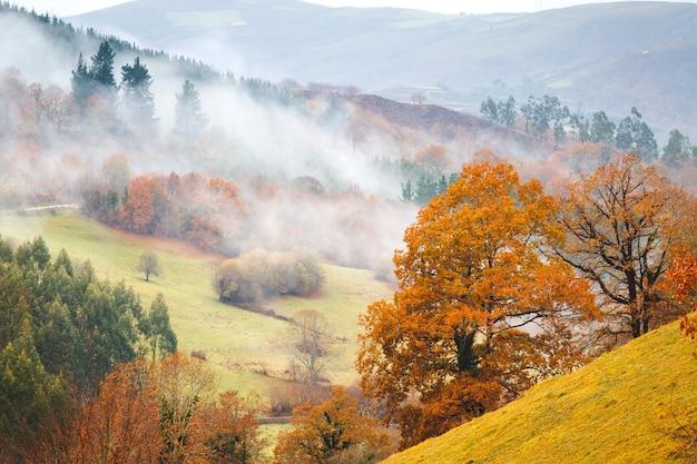 Herfstbomen en mist