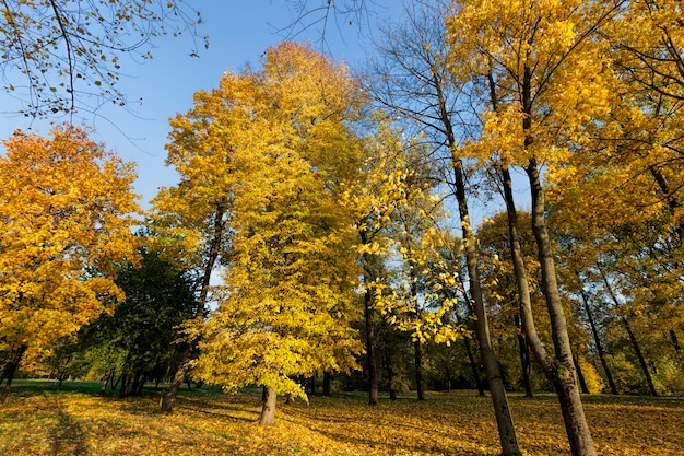 Herfstboom met blad dat van kleur veranderde in het herfstseizoen, landschap van loofbomen in het herfstseizoen tijdens bladval, natuur