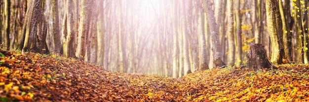 Herfstbos met gevallen bladeren op de weg bij zonnig weer