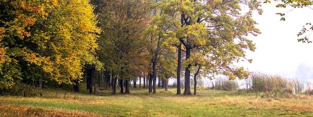 Herfstbos met kleurrijke bladeren aan de bomen, panorama