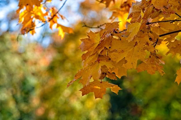 Herfstesdoornbladeren op vage achtergrond