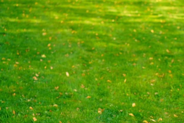 Herfstgras met gevallen gele bladeren in zonsonderganglicht herfstbladeren op groen gras in zonlicht vallen...