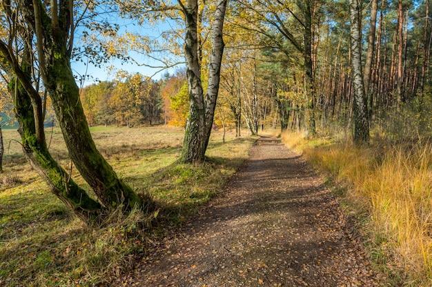 Herfstkleuren in het odenwald