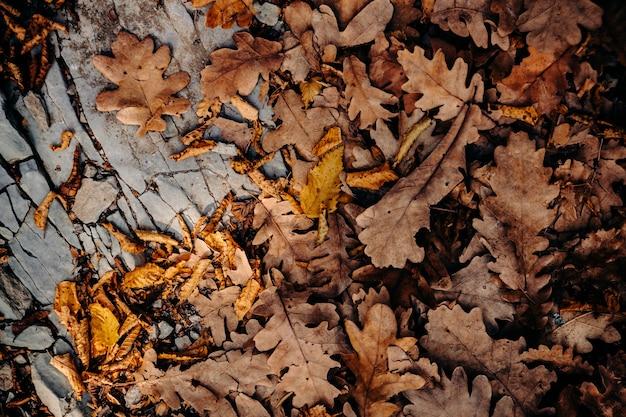 Herfstkleuren van gebladerte op de grond. droog gevallen eikenbladeren liggen op een grijze rots. geweldige tijd voor gestructureerde foto's