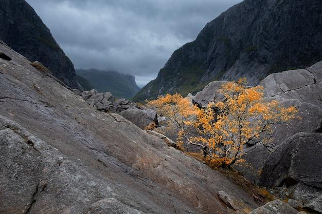 Herfstlandschap, eenzame gele boom in de mistige harde bergen in de avond