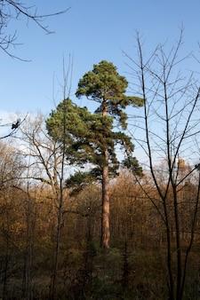 Herfstlandschap in een bos of park met kale bomen met gevallen bladeren, warm en zonnig weer voor de herfst