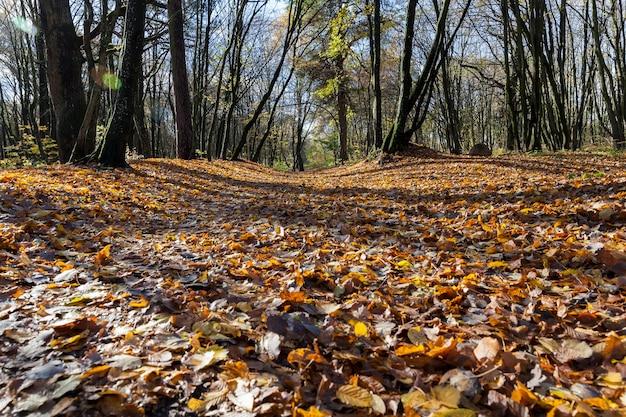 Herfstlandschap met bomen die op de grond vielen