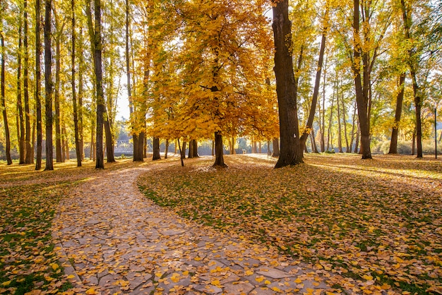 Herfstlandschap met bomen met bladeren op de grond, die een deel van de weg bedekken.