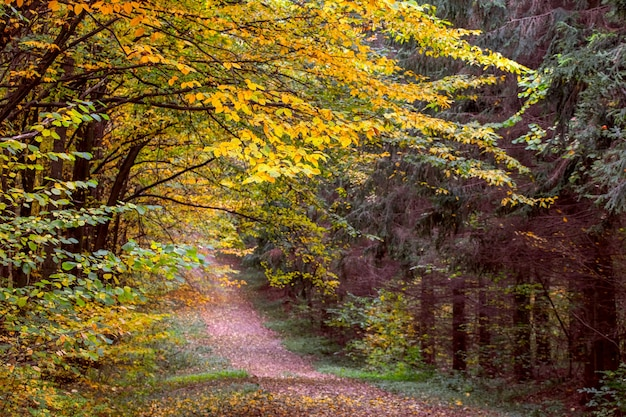 Herfstlandschap met kleurrijke bomen in het bos. weg tussen bomen in het herfstbos