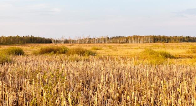 Herfstlandschap met vergeeld gras en kale bomen die in het bos groeien