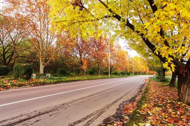 Herfstlandschap met weg en gele en rode bladeren