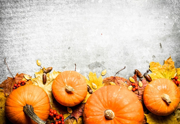 Herfstoogst pompoenen met herfstbladeren op de stenen tafel