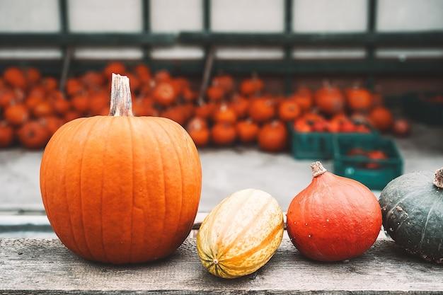 Herfstoogst van pompoenen stapel oranje pompoenen op boerderijmarkt of seizoensfestival
