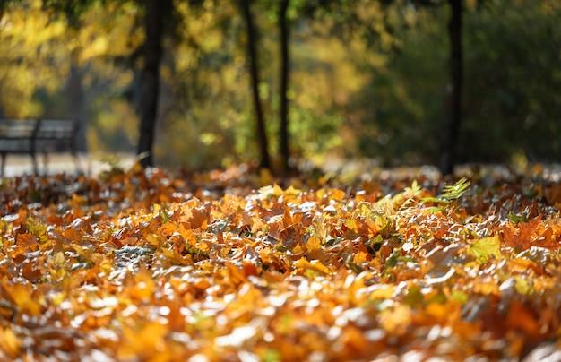 Herfstpark met bomen en struiken, gele bladeren op de grond en op de takken. idyllische scène
