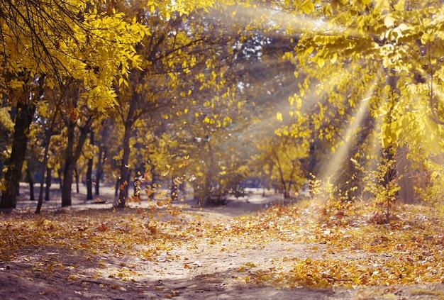 Herfstpark met bomen en struiken, gele bladeren op de grond. het pad leidt in de verte