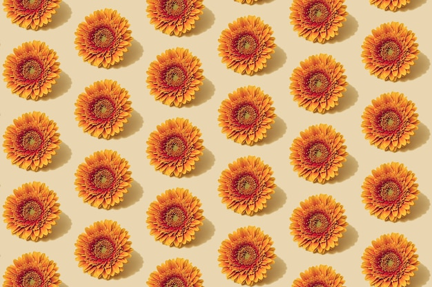 Herfstpatroon in gele en oranje kleur. herfst madeliefje bloem minimale achtergrond. creatieve herfstlay-out.