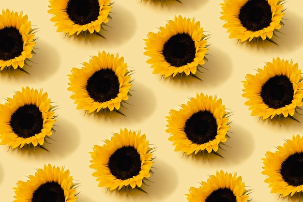 Herfstpatroon in gele en oranje kleur. zonnebloem hoofd minimale achtergrond. creatieve lay-out.