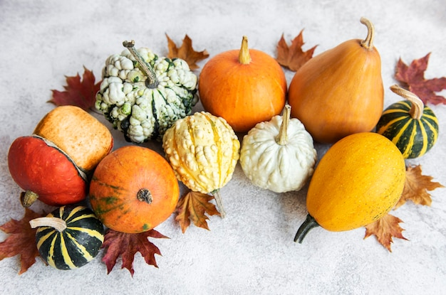 Herfstsamenstelling, gezellig herfstseizoen, pompoenen en bladeren op betonnen ondergrond. symbool van thanksgiving vakantie, plat lag