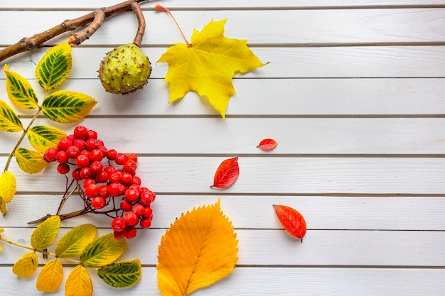 Herfstsamenstelling van gevallen bladeren van esdoorn, lijsterbes, kastanje