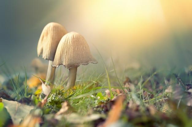 Herfstscène met zacht licht en paddenstoelen tegen onscherpe achtergrond