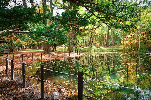 Herfstseizoen in maruyama park