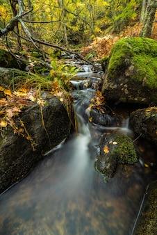 Herfsttafereel van een rivier in een bos met typische gelige kleuren van de herfst