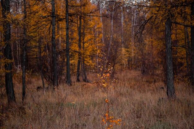 Herfsttijd in het bos