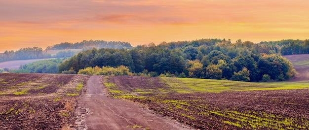 Herfstveld met groene spruiten van wintertarwe en bos in de verte tijdens zonsondergang