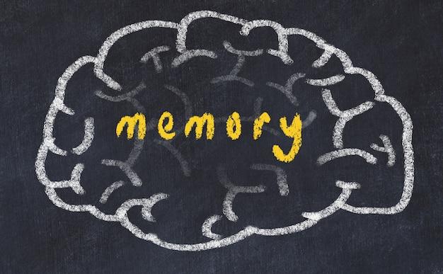 Hersenen met inscriptie geheugen