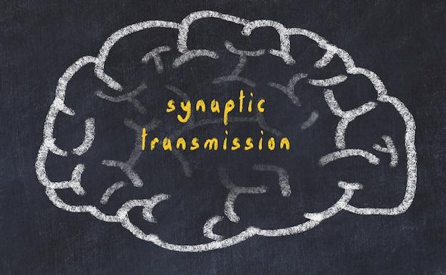Hersenen met inscriptie synaptische transmissie