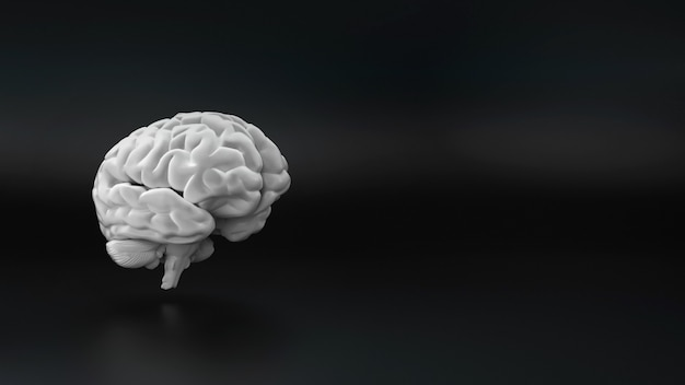 Hersenen op zwarte achtergrond