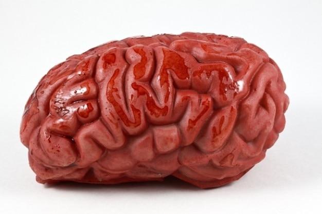 Hersenen prop