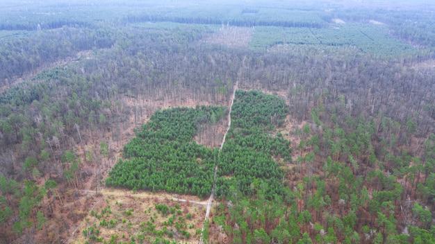 Herstel van het bos op de helling na volledige kap. drone-weergave.