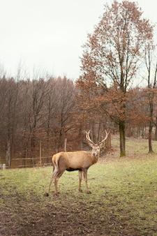 Herten gevangen in het wilde bos