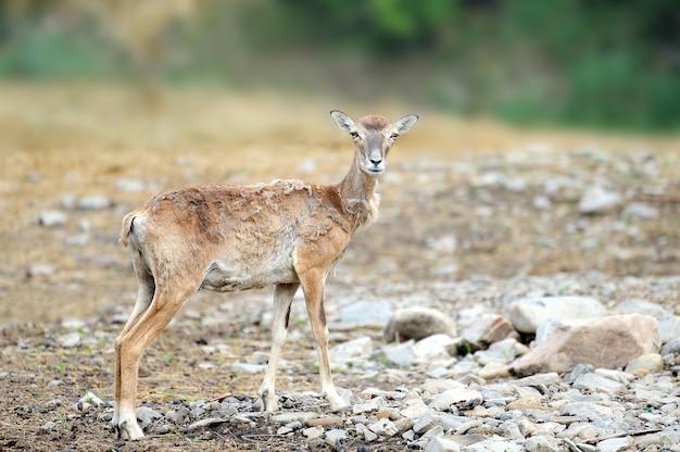 Herten op een achtergrond van dieren in het wild. wildlife scène.