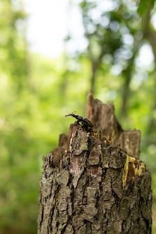 Hertenkever zit op een boom in het bos