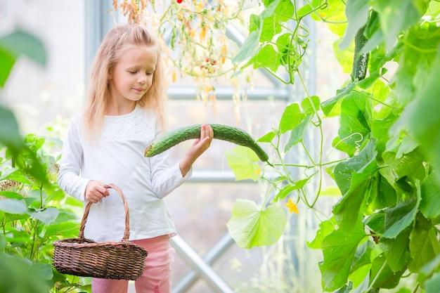 Het aanbiddelijke meisje oogst komkommers en tomaten in serre. seizoen van rijpende groenten in groene huizen.