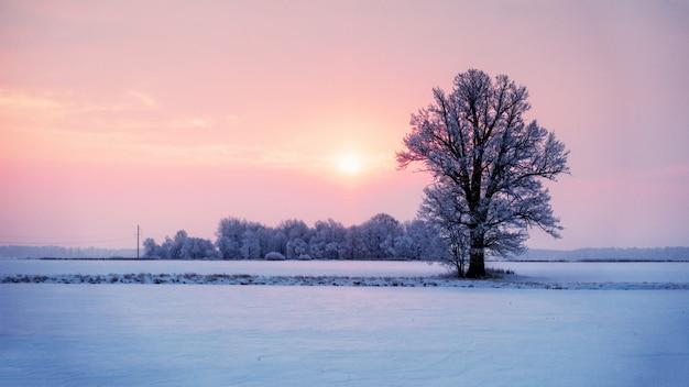 Het abstracte landschap van de de winterzonsopgang met een eenzame boom en een kleurrijke hemel.