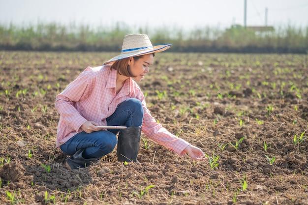 Het aziatische de slijtage roze overhemd van de landbouwersvrouw en hoeden houden graan van de tabletinstallatie bij landbouwbedrijf