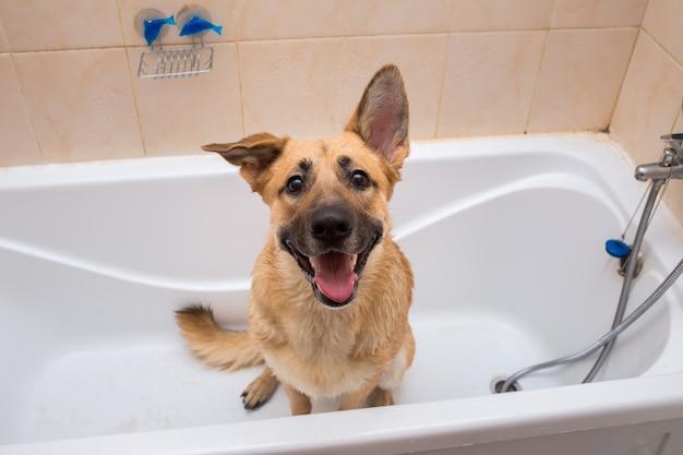 Het baden van de grappige hond van gemengd ras. hond die een schuimbad neemt.