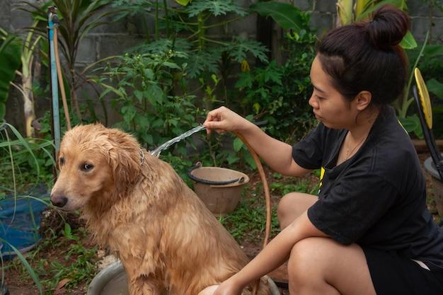 Het baden van hond, een vrouw baadt voor haar hond golden retriever.