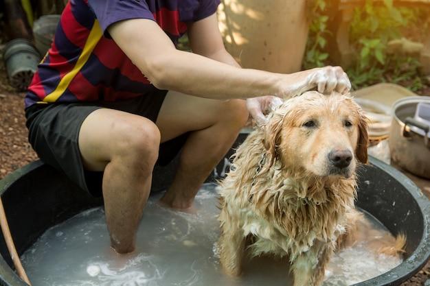 Het baden van hond, gouden retriever die van de hond een douche neemt en haar met water en zeep wast