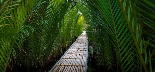Het bamboeweg in mangrove