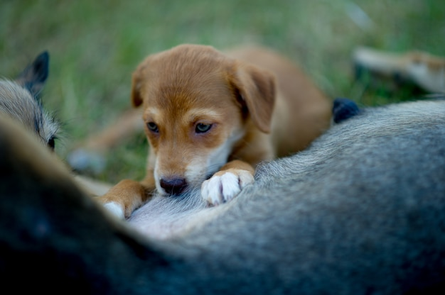 Het beeld van een puppy die moedermelk van honger eten het concept van de hondminnaar met exemplaarruimte