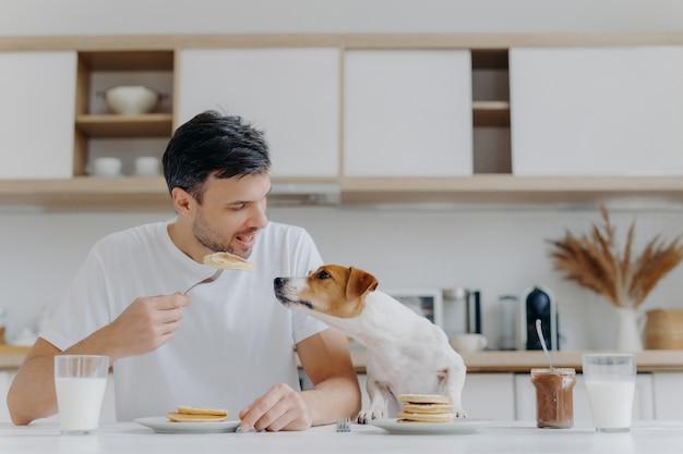 Het beeld van knap van de mens in toevallige witte t-shirt, eet smakelijke pannekoeken, deelt niet met hond, stelt tegen keukenbinnenland, heeft pret, drinkt melk van glas. ontbijt tijd concept. zoet dessert
