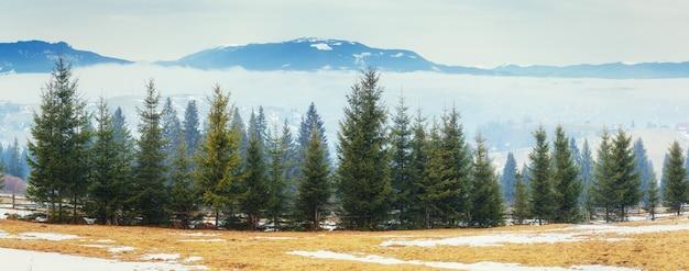 Het begin van de lente in de bergen. karpaten. oekraïne.