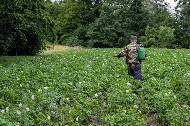 Het bespuiten van de mens van pesticide op aardappelplantage.