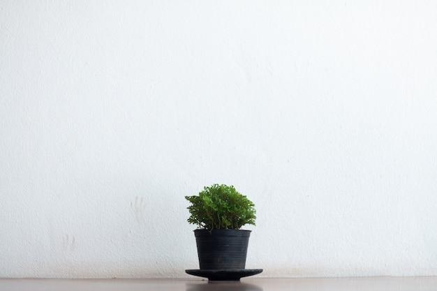 Het binnenlandse blad van de groene installatieboom in witte potten kleine decoratief op houten lijst